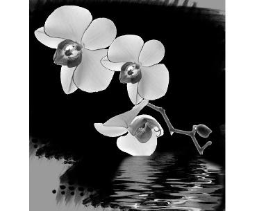Lasergravure orchidee