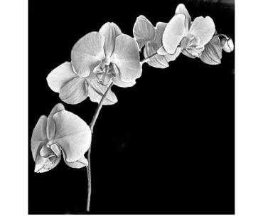 Lasergravure orchidee op zwart graniet